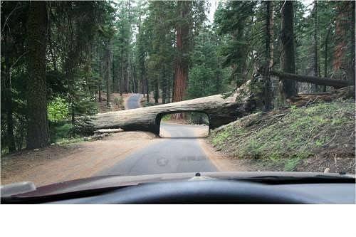 Një tunel i pazakontë në parkun Kombëtar të Kalifornisë,Sequoia.