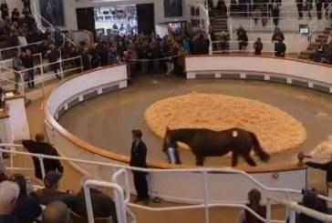 """Varianti arab i """"Pyllit të lirisë"""": Sheiku i Dubait blen një kalë race për 4 milion dollarë (video)"""