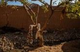 MALLKIMI/ Bombat sovjetike në Afganistan ende marrin jetë civilësh