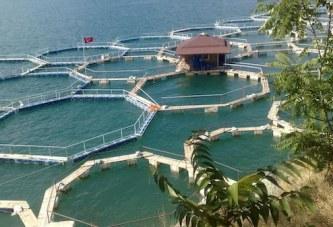 Turqia, rekorde në eksportet e peshkut: nga Hollanda në Ruandë