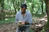MISIONI/ Jeta e të mbijetuarit të Srebrenicës: të gjeje trupa të zhdukur viktimash