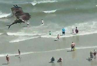 Video virale: Një peshkaqen në kthetrat e një shqiponje?
